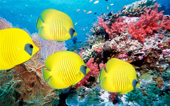 Обои Подводный мир тропических рыб и кораллов