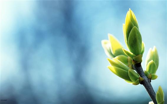 배경 화면 따뜻한 봄 녹색 촬영 사진