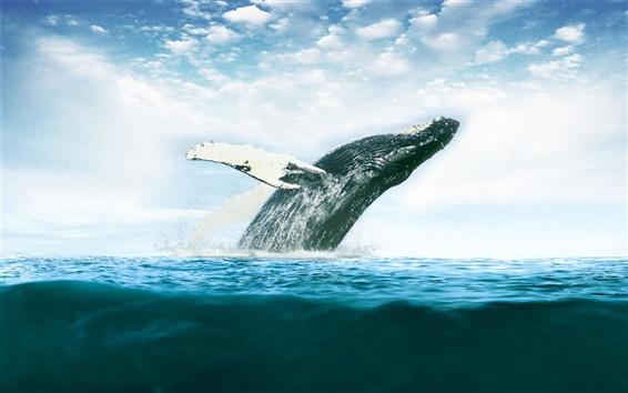 【海の王様】迫力満点!クジラ(鯨)の高画質な壁紙30枚