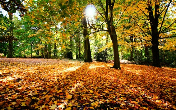 Wallpaper Autumn trees nature leaves and sun