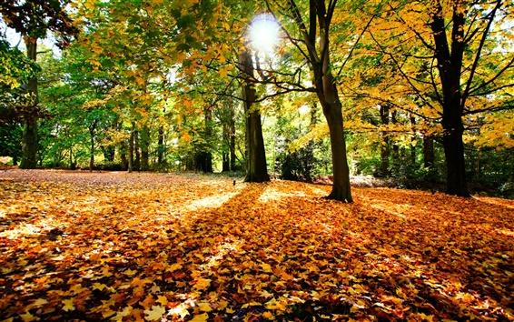 Papéis de Parede Folhas de outono árvores, natureza e sol
