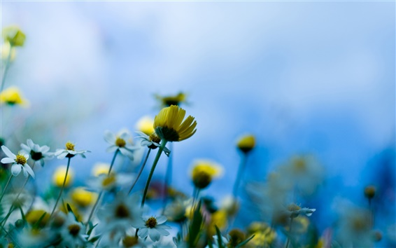 Wallpaper Blue background of yellow flowers