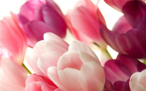 Wallpaper Bouquet of pink tulips macro