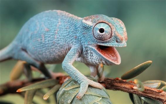 Fondos de pantalla Los ojos del camaleón