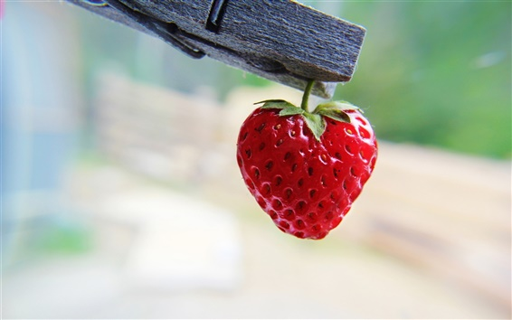 Wallpaper Clothespin on the strawberry nice