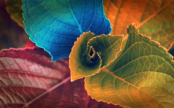 Wallpaper Colorful leaves