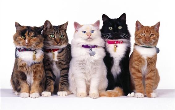 Papéis de Parede Cinco gatos close-up