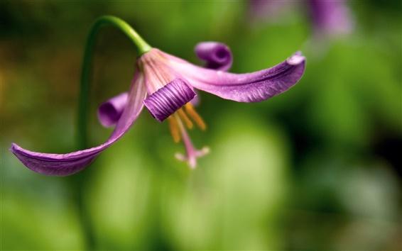 Wallpaper Flower background blur
