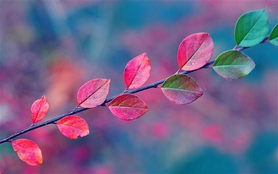 Papéis de Parede Folhas verdes ficam vermelhos no Outono