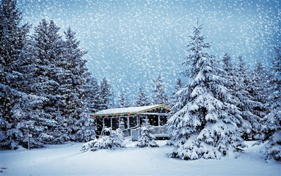 Wallpaper House in the winter forest