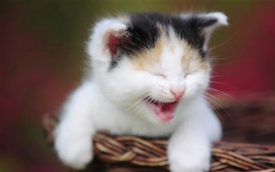 Обои Котенок зевая корзину