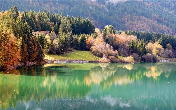 Wallpaper Natural riparian forest in autumn