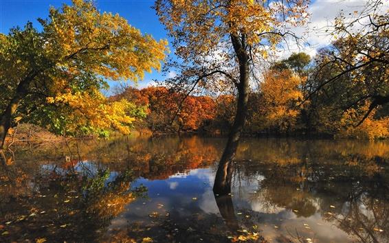 Обои Природа осенью деревья озеро
