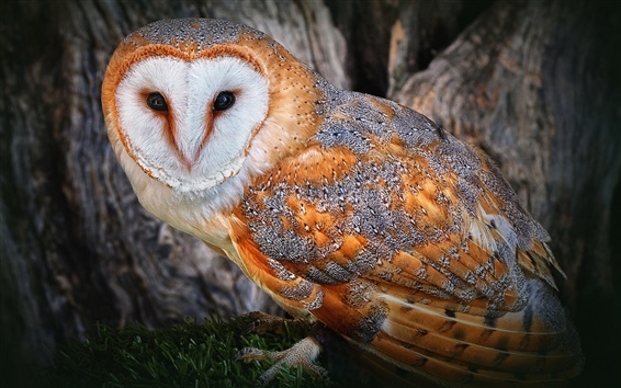 Wallpaper Owl golden feathers