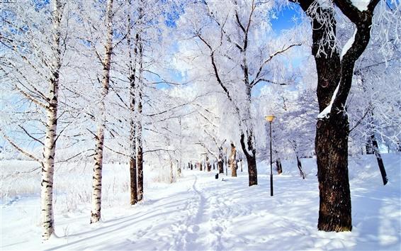 배경 화면 눈 공원 숲