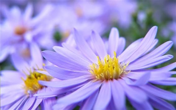 Papéis de Parede Purple flower macro pétalas