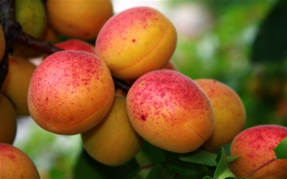Wallpaper Red apricot fruit