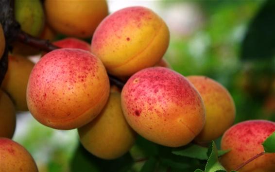 Papéis de Parede Fruto de damasco vermelho