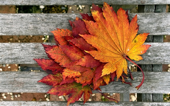 壁紙 木の上に赤いカエデの葉