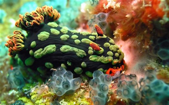 Wallpaper Sea coral