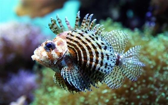 Fond d'écran En eau peu profonde de poissons tropicaux