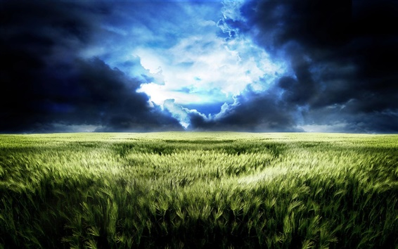 Wallpaper The dream world of endless wheat fields scenery