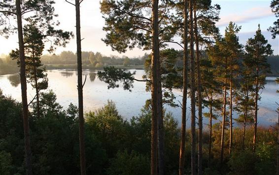 Fondos de pantalla Los árboles del bosque de la ribera del río
