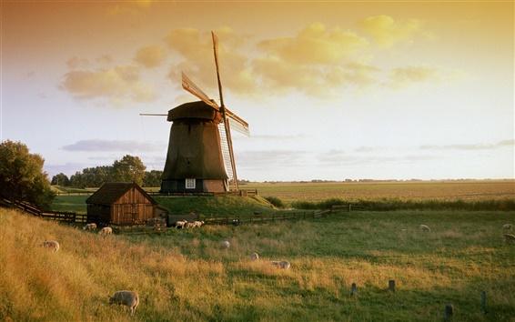 Papéis de Parede O moinho de vento no Outono