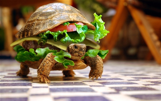 Wallpaper Turtle food creative images