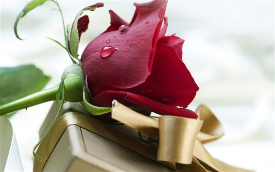 Wallpaper Valentine's Day red rose and gift