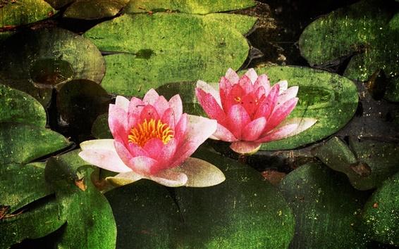 Wallpaper Water lily flower pattern