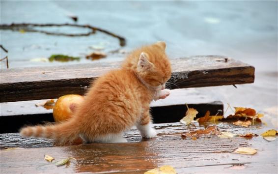 Обои Осень оранжевый котенка