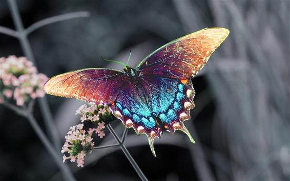 배경 화면 아름다운 형형색색의 나비