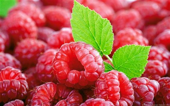 배경 화면 딸기의 라스베리 잎