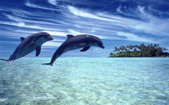 배경 화면 바다의 명랑한 돌고래