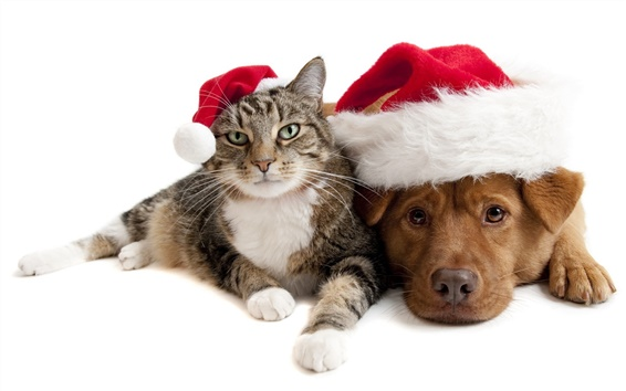 배경 화면 크리스마스 고양이와 강아지