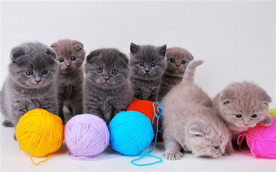 Wallpaper Cute kittens with ball of yarn