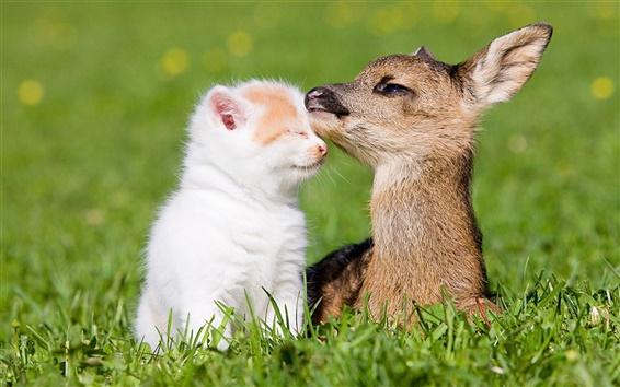Fondos de pantalla Gatito y la amistad ciervos pequeño