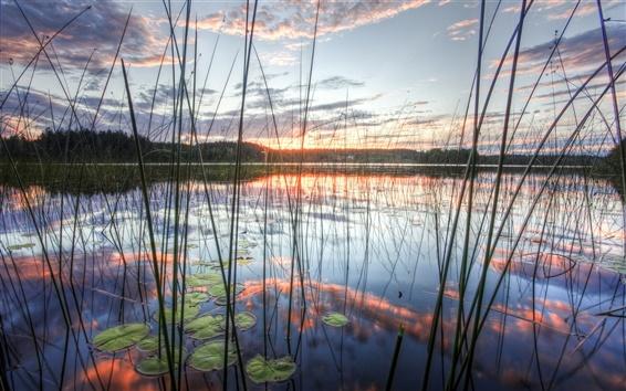 Обои Камыши озеро небо