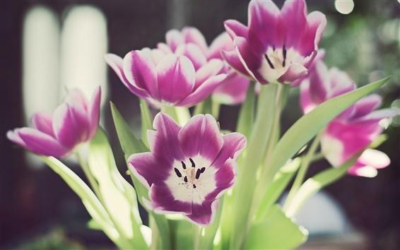 Обои Макрос Tulip лепестки