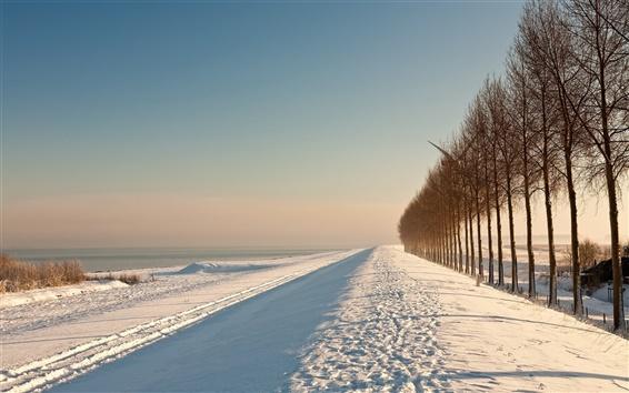 Обои Зимние деревья поле