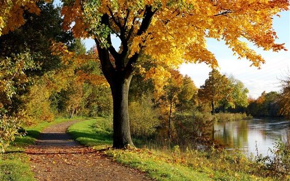 Обои Осеннее дерево парка