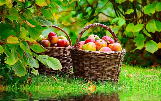 Wallpaper Basket with apples
