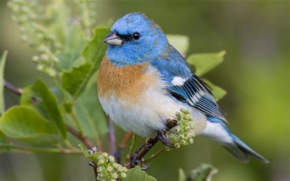 Обои Красивая синяя птица