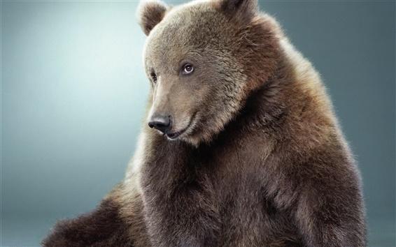 배경 화면 클로즈업 곰의