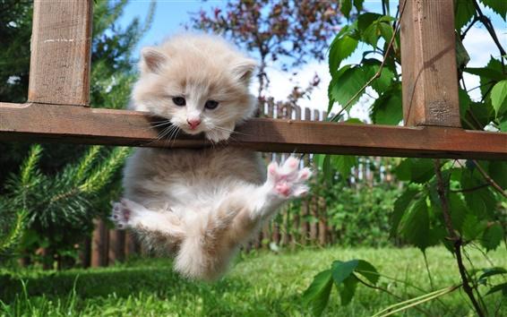 Fond d'écran Mignon chaton jouant
