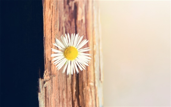 Wallpaper Daisy tree texture