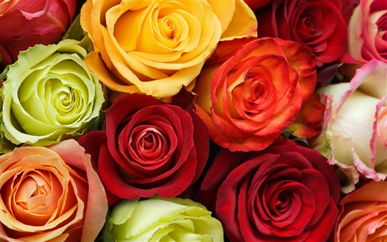 Wallpaper Flowers roses background