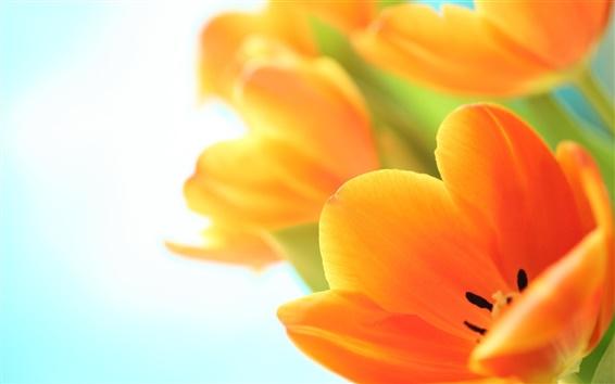 Обои Цветы тюльпаны весной