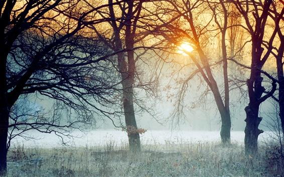 Wallpaper Morning fog in forest